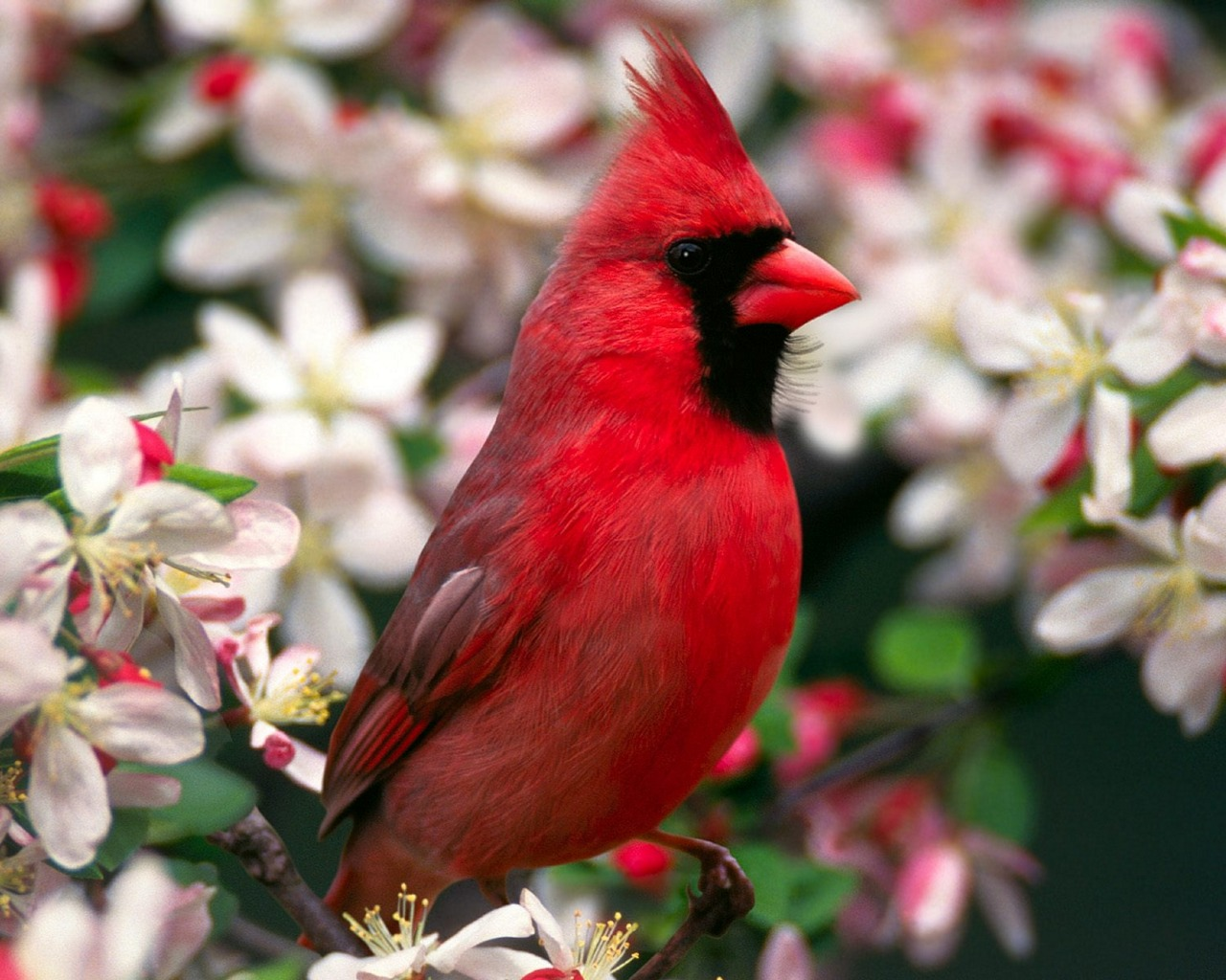 beautiful-bird-wallpaper-pics