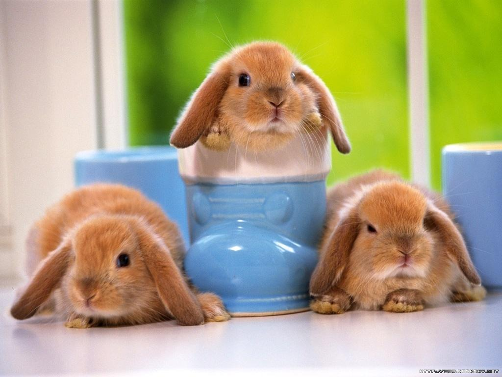 cute-little-bunnies