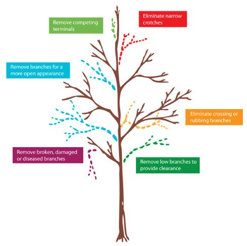Types of Pruning